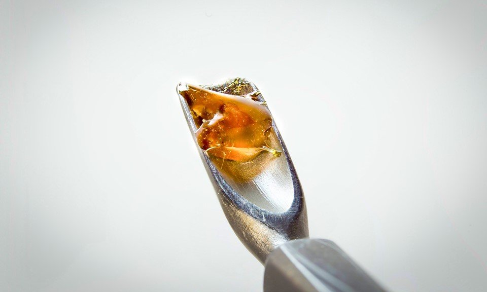 Solventless Concentrates Explained