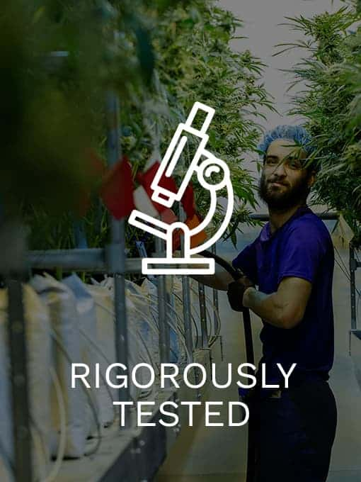 top rated cannabis products
